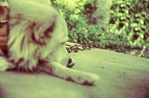 photo_27338_20130821